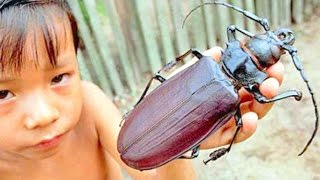 10 BIGGEST Insect Photos Explained