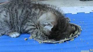 falling asleep while eating.m4v