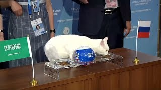 Psychic cat predicts Russia will win World Cup opener