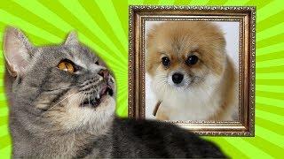 ЕЕ БОЛЬШЕ НЕ БУДЕТ С НАМИ... Кот Макс выгоняет собаку Алису