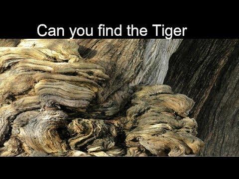 hidden animals optical illusion nobody