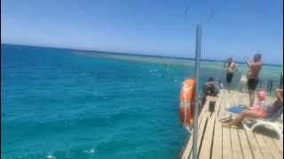 Египет 2021 Территория море бассейн отель Stella Di Mare Beach Resort Spa Makadi bay