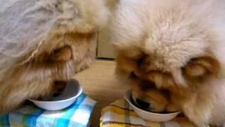 ブログのアドレスです。 チャウチャウ犬とポメラニアン http://chowpome...