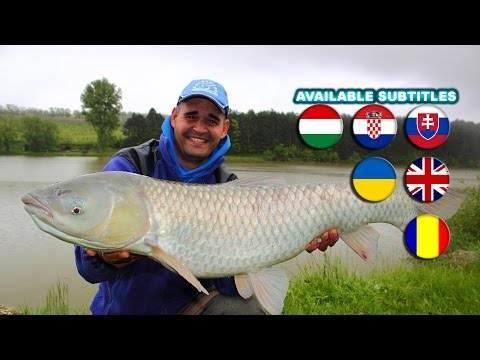 Using FermentX for Large Fish  A movie by Gábor Sipos