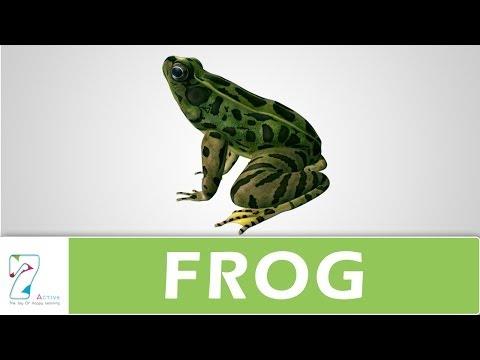 Amazing Explanation Of Frog