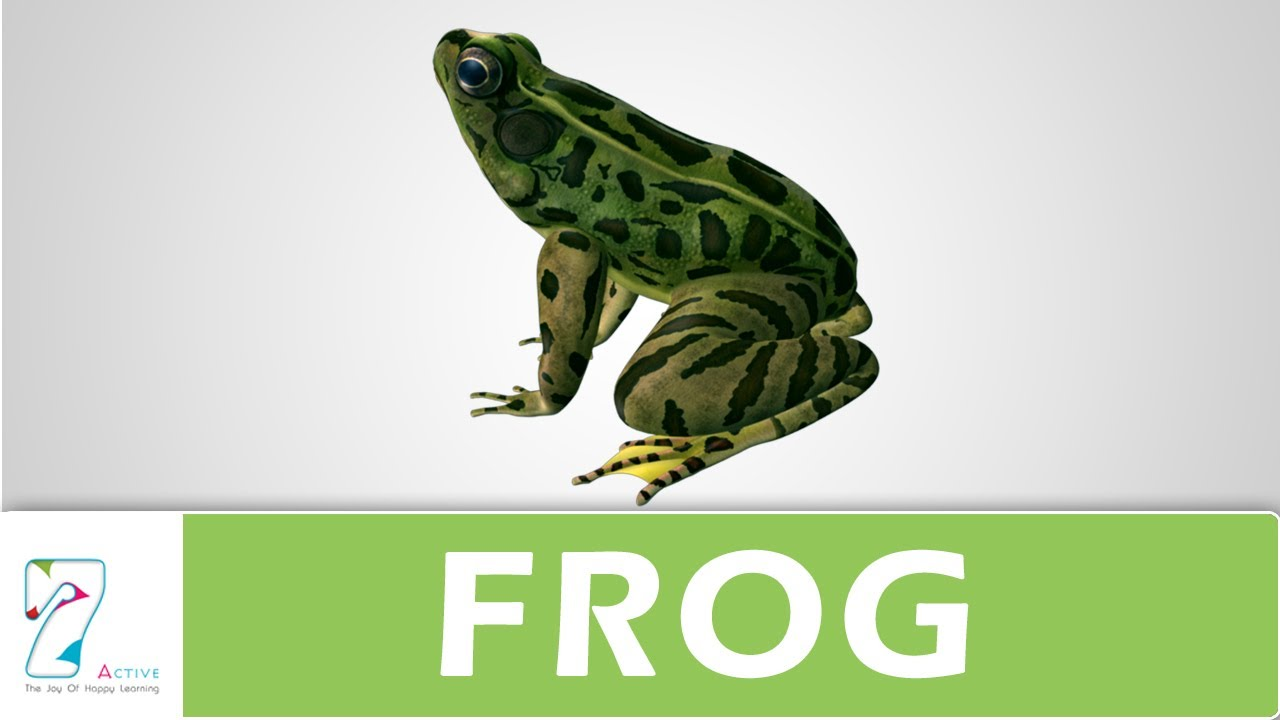 amazing explanation of frog youtube