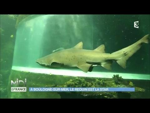 a boulogne sur mer le requin est la star youtube. Black Bedroom Furniture Sets. Home Design Ideas