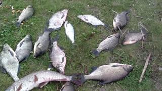 Рыбалка на Каме I Татарстан I Щука, сазан, лещ, подлещик, цапля, нефть