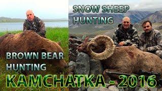 Kamchatka snow sheep and brown bear hunting Russia 2016