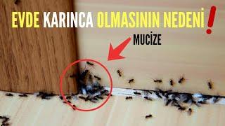 Evde KARINCA Olmasının Nedenini Duyunca Şaşıracaksınız! Karınca Eve Neden Gelir?