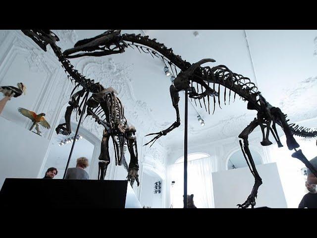 <span class='as_h2'><a href='https://webtv.eklogika.gr/parisi-se-dimoprasia-skeletos-deinosayroy' target='_blank' title='Παρίσι: Σε δημοπρασία σκελετός δεινοσαύρου'>Παρίσι: Σε δημοπρασία σκελετός δεινοσαύρου</a></span>