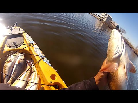 1,000,000 Redfish!!! Quick Winter Limits of Redfish in Myrtle Grove
