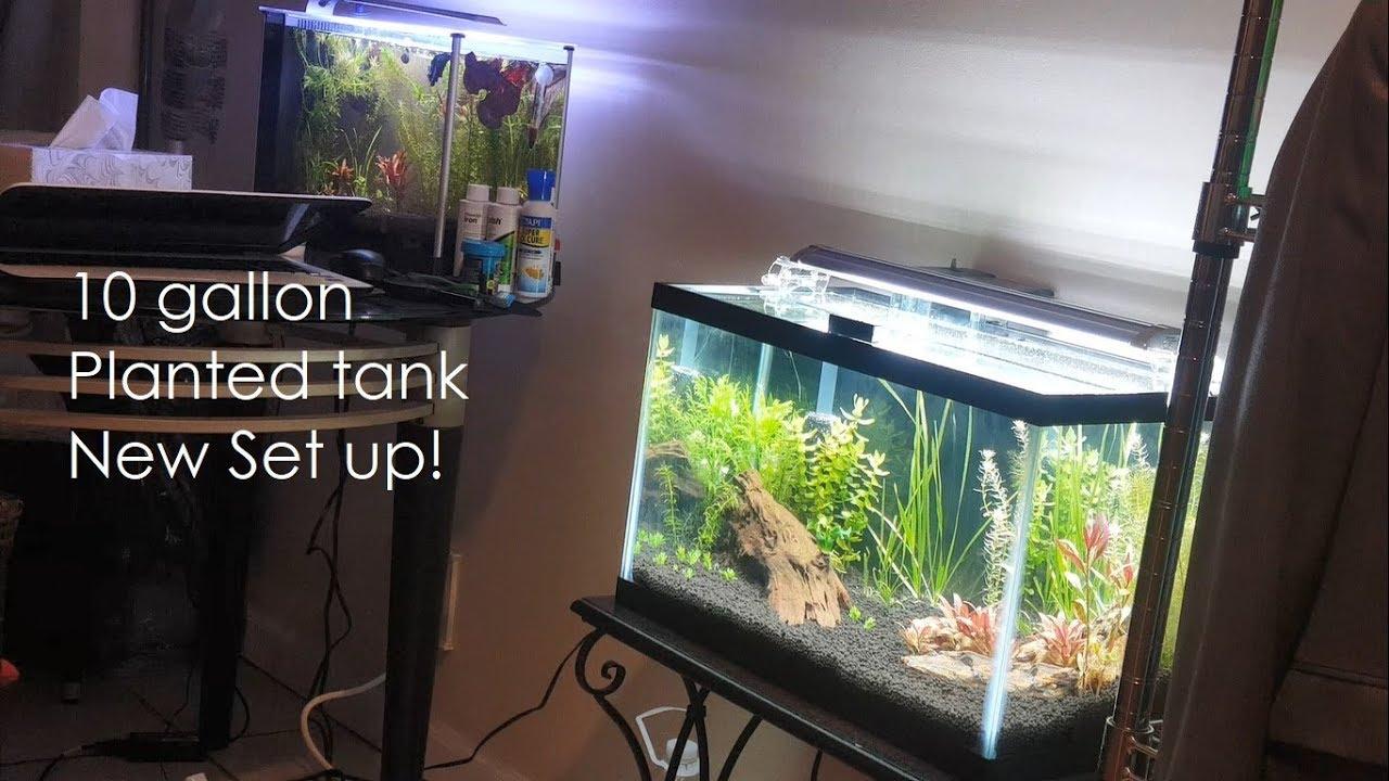 Download Low Tech - NO CO2 - 10 gallon planted tank set up