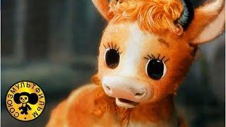 Download Волк и теленок | Советские мультики про волка для детей Mp3 and Videos