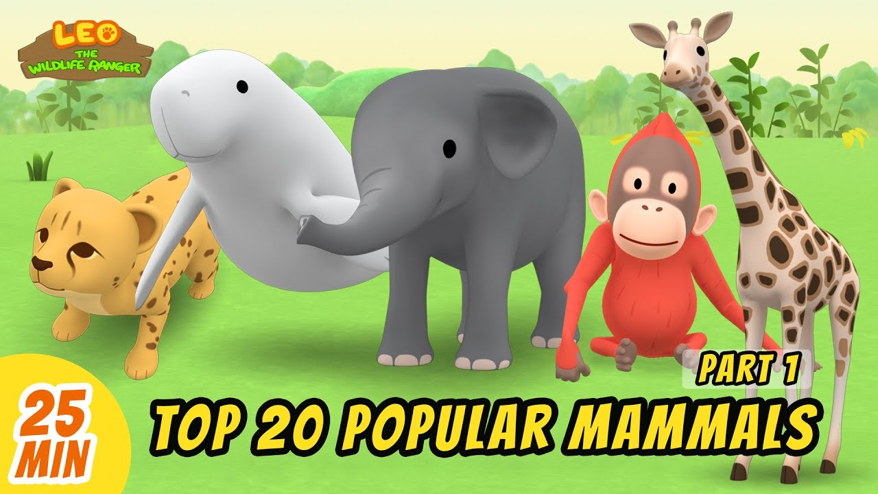 Top 20 Popular Mammals Minisode Compilation (Part 1/4) - Leo the Wildlife Ranger   Animation