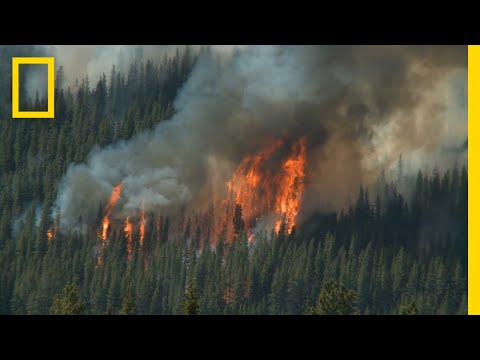 Wildfires 101   National Geographic