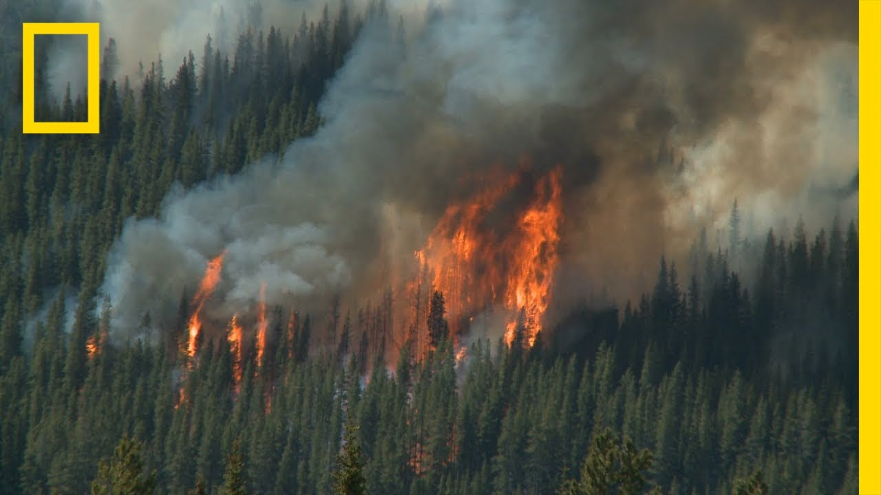 Wildfires 101 | National Geographic