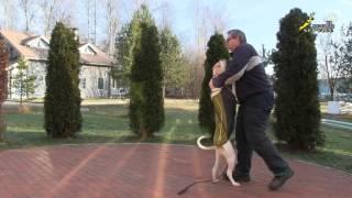 видео Вейтпуллинг. Для собаки или для хозяина?
