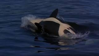 Imaginaerum: Let Dolphins Live Free!