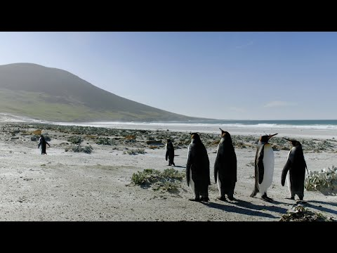 Falkland Islands: Paradise Rediscovered