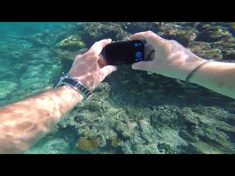 Snorkling in Smith Cove, Grand Cayman Island