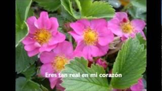 Tu amor por mi- Casa de Oración México
