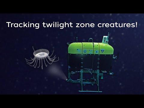 Underwater robot tracks ocean creatures