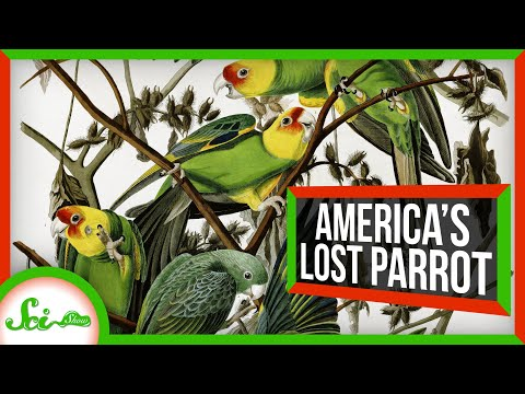 North America's Lost Parrot
