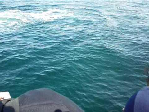 Balene al largo del Nord America