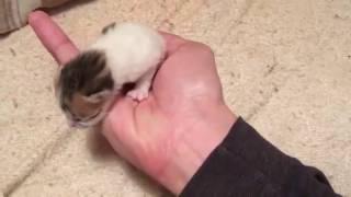 産まれたばかりの子猫です。