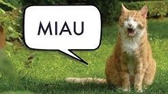 Kielinuppu - Mitä kissa sanoo?