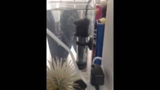 Tetra Submersible Heater (2-15 gal. tank)