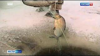 На Ямале увеличили квоту на традиционное рыболовство