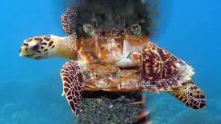 Фильм о морских обитателей