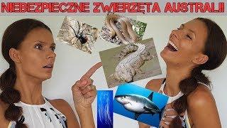 Niebezpieczne zwierzęta Australii: WĘŻE, PAJĄKI, REKINY, MEDUZY, KROKODYLE