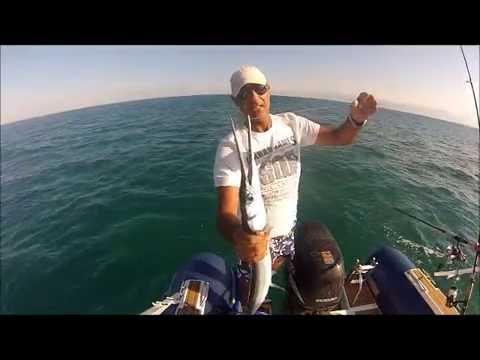Live Bait Fishing For Needle Fish