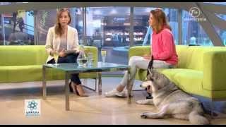 Ula Mackiewicz, Wolontariuszka schroniska dla zwierząt, Galaktyka Pomerania 19 06 2015