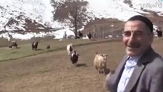 Bingöllü Çoban, 8 Yıl Sonra Yine \