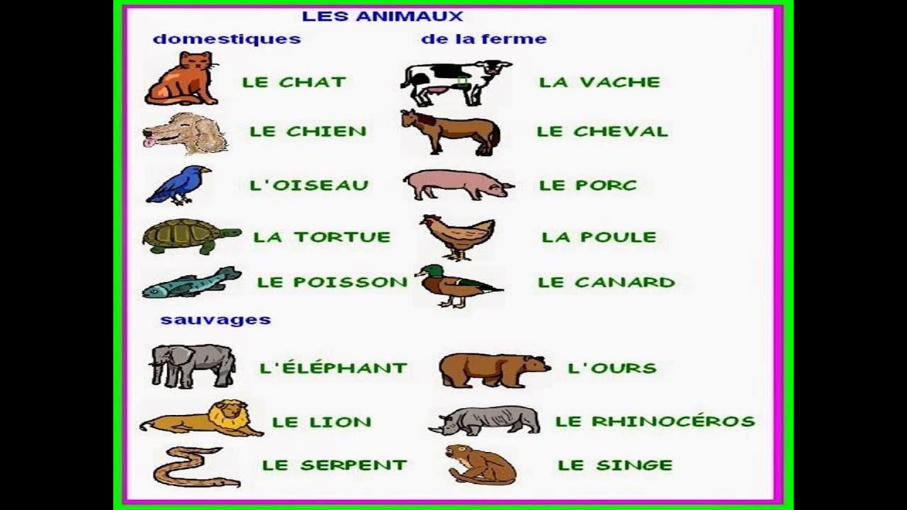 أفضل أسماء الحيوانات الأليفة 14