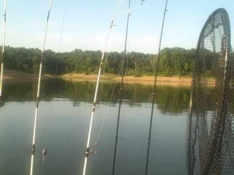 Prepping for pro hybrid bass fishing truman lake missouri for Fishing lakes in missouri