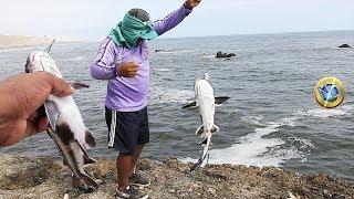Miren la pesca del pez gato (bagre) peces con bigotes