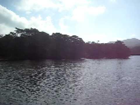 西表島の浦内川を上るボート