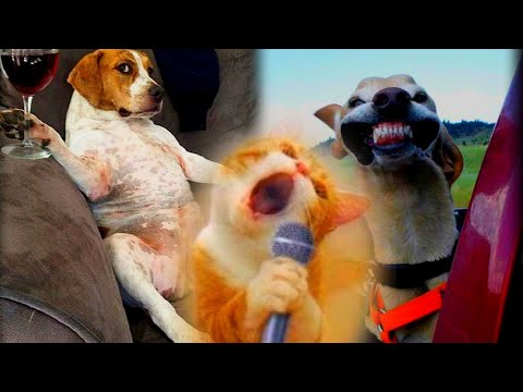 Try Not To Laugh  or Grin While Watching Funny Animals Compilation #4