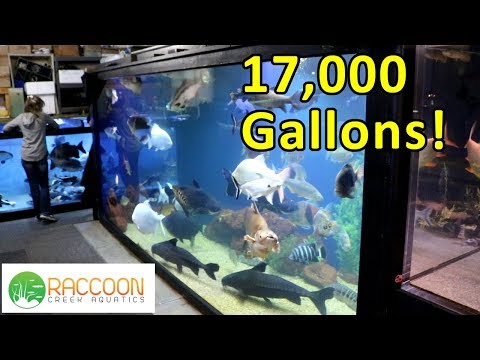 17,000 Gallons of Monster Fish At Ohio Fish Rescue