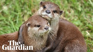 'You can't furlough an otter': how coronavirus devastated a family-run zoo