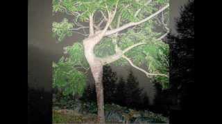 LA DANZA DEL BOSCO by Aldo Scaglia ( versione con tuoni e canto di uccelli)