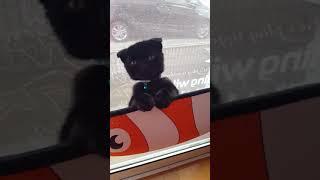 黒猫のタンゴ? thumbnail