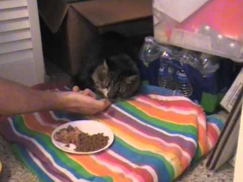 How to Make a Cat eat and Drink when it is Sick