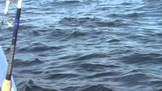 Niantic fishing video July 2012 highlights(Niantic fishing video highlights., 2012-07-05T03:21:18.000Z)