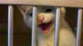 My kitten Tiger asking me to adopt him at the shelter thumbnail
